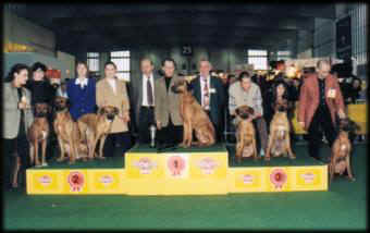 Progeny Group with CH. Rydgeway African Hunter: